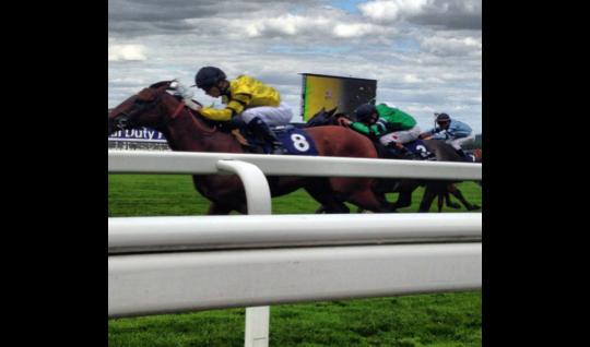 Horse race photograph