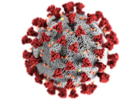 Image of the novel coronavirus