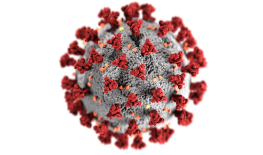 Image of the novel coronavirus