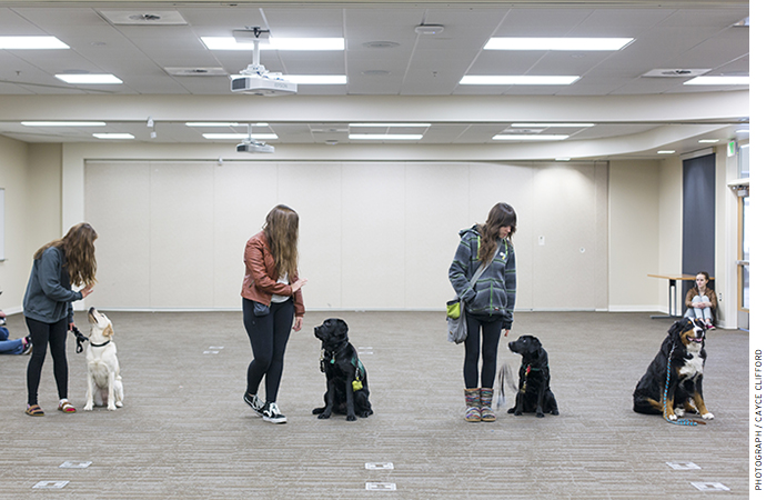 Animal science students at Innovations have the opportunity to train a guide dog.